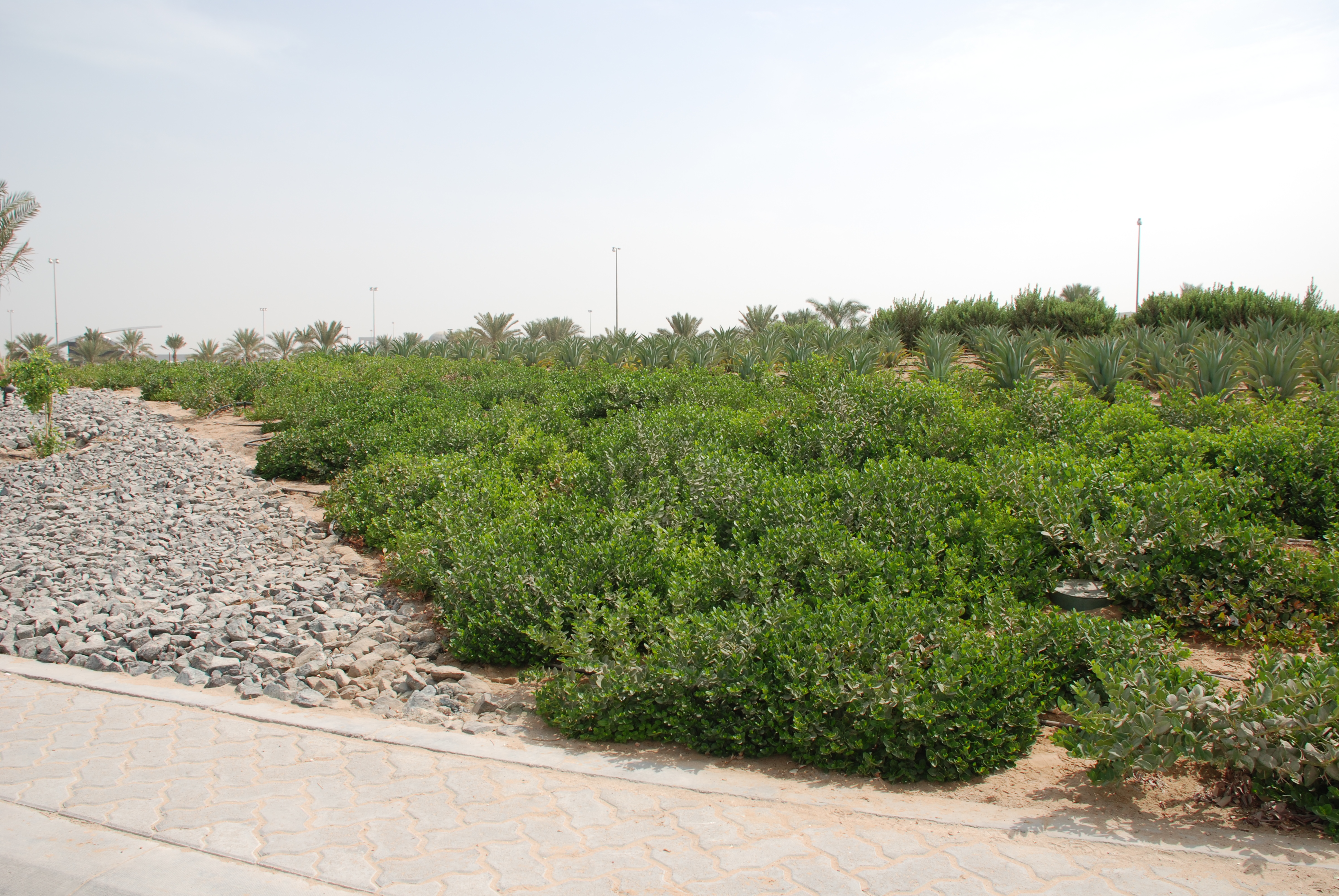 Attractive Landscape And Irrigation Works At West Sector 62, Infront Of H.H SHEIKHAH  MARIAM Palace Abu Dhabi