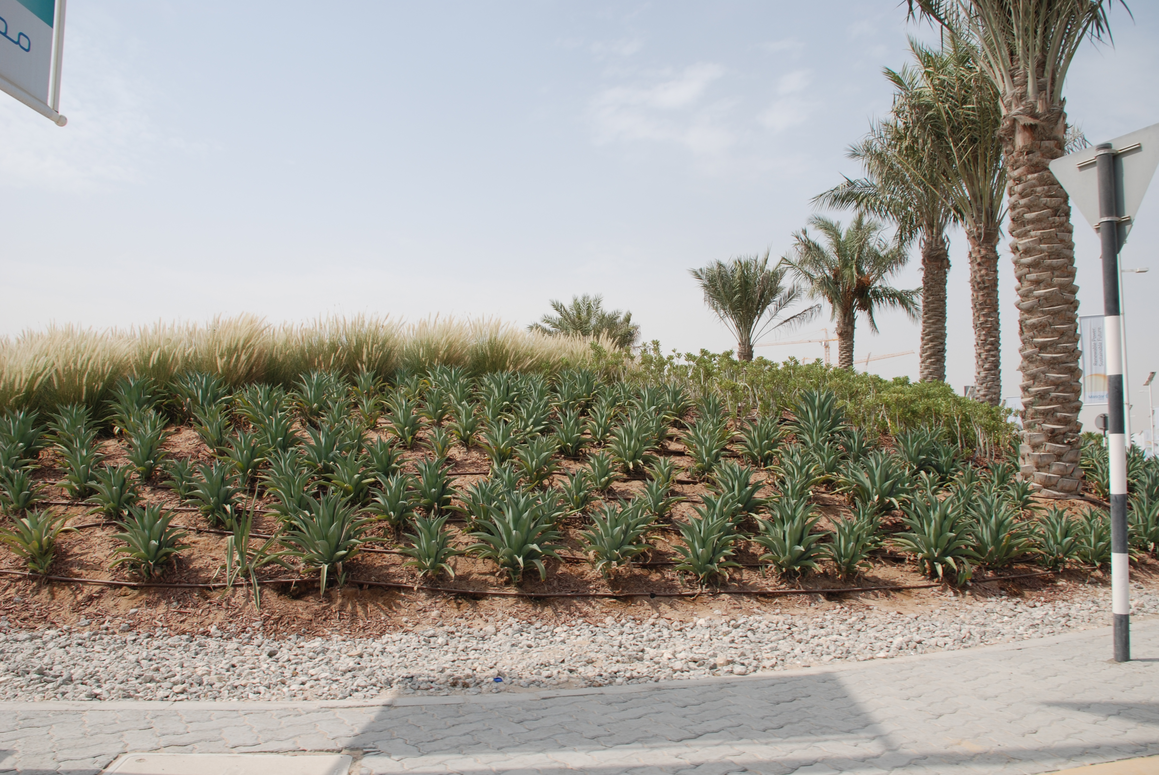 Wonderful Landscape And Irrigation Works At West Sector 62, Infront Of H.H SHEIKHAH  MARIAM Palace Abu Dhabi