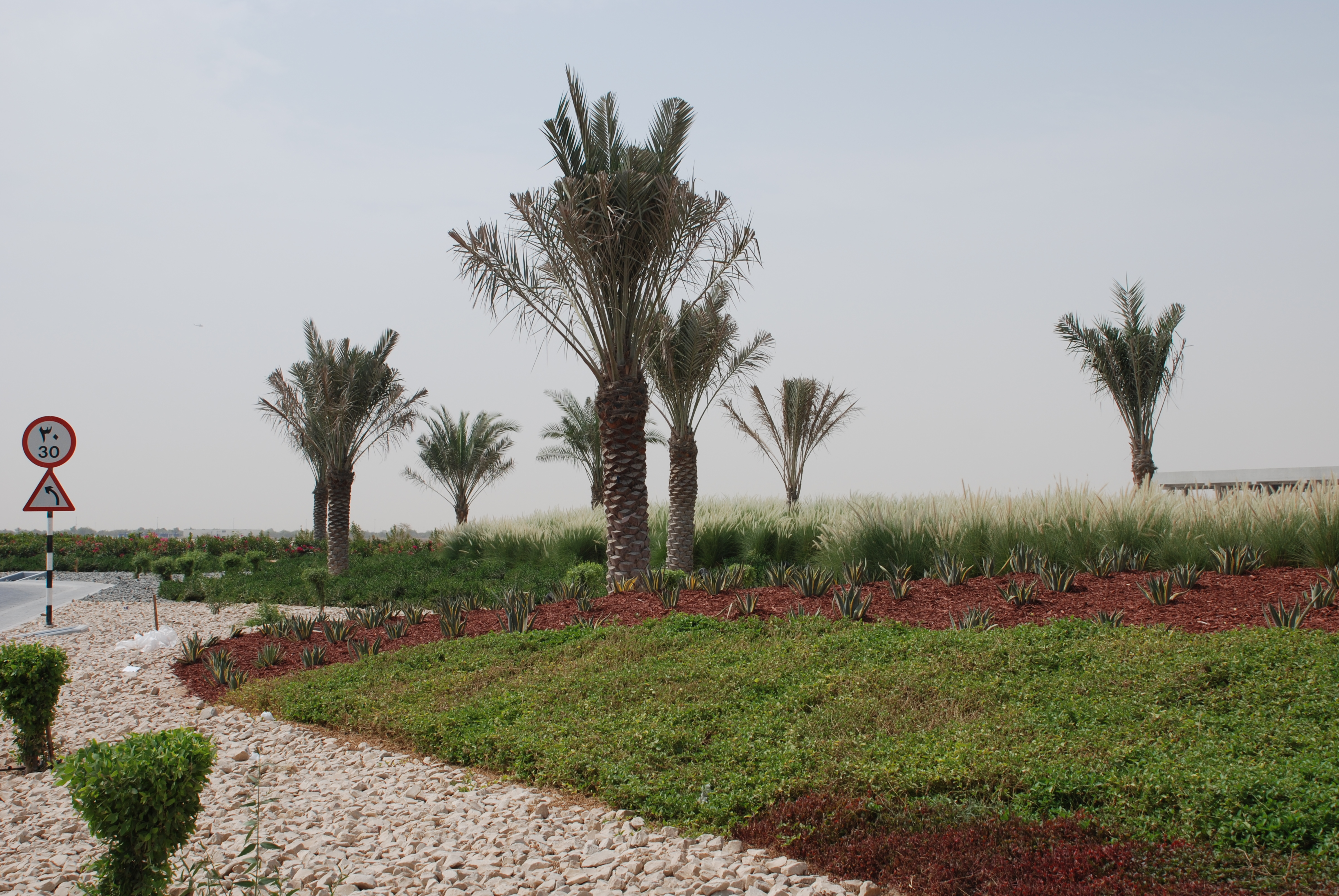 Landscape And Irrigation Works At West Sector 62, Infront Of H.H SHEIKHAH  MARIAM Palace Abu Dhabi